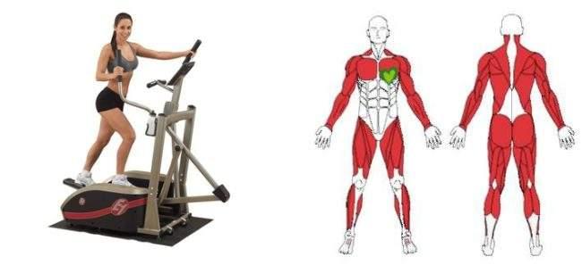 Мышцы которые работают при занятии на эллипсоиде